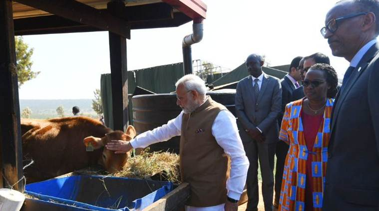 PM Modi gifts 200 cows to Rwanda village