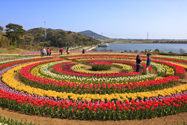 Tulip garden thrown open for visitors